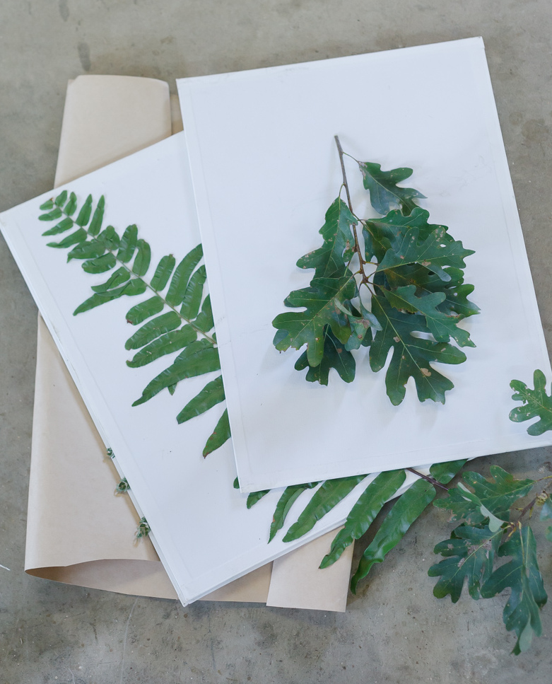 Pressed Leaf Shadow Boxes